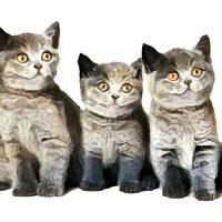 Kattennamen