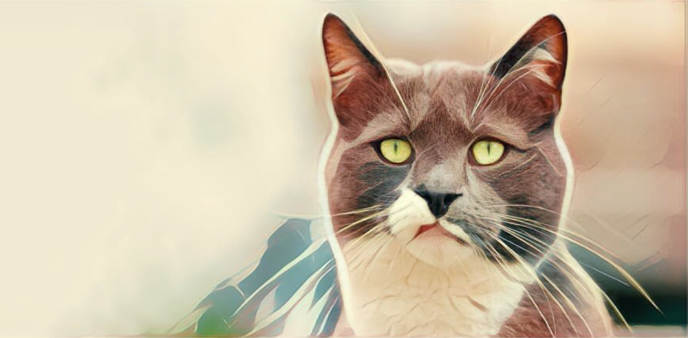 Kat kijkt afkeurend