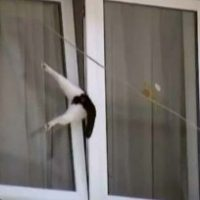 Kat raakt klem in venster