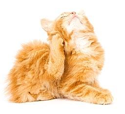 Kitten met jeuk