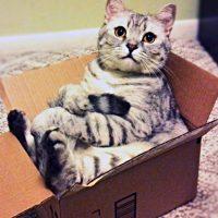 Verhuizen. Hoe gaat dat met een kat?