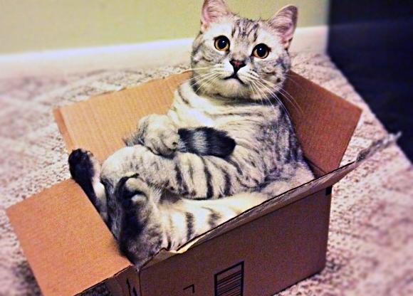 Kat in verhuisdoos