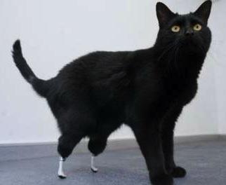 Oscar, kat met prothesen