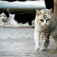 Voedselbank voor huisdieren