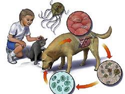 Overdracht van maag- en darmparasieten van dier op mens