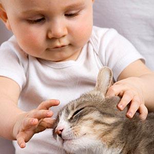 De kat en de introductie van de baby