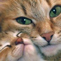 Hoe kies je de beste voeding voor je kat?
