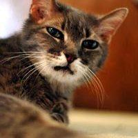 Voeding en gedrag bij de oudere kat