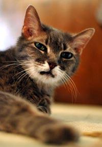 De oudere kat