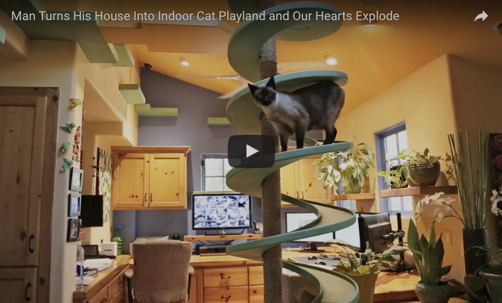 Man bouwt speelparadijs voor zijn geadopteerde katten