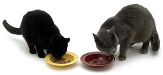 Leer katten samen te eten