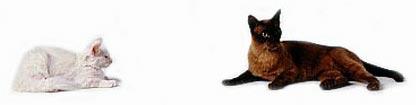 De introductie van een nieuw kitten