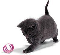Spelende kitten