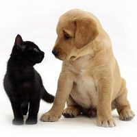 Introductie van een puppy bij een al aanwezige kat