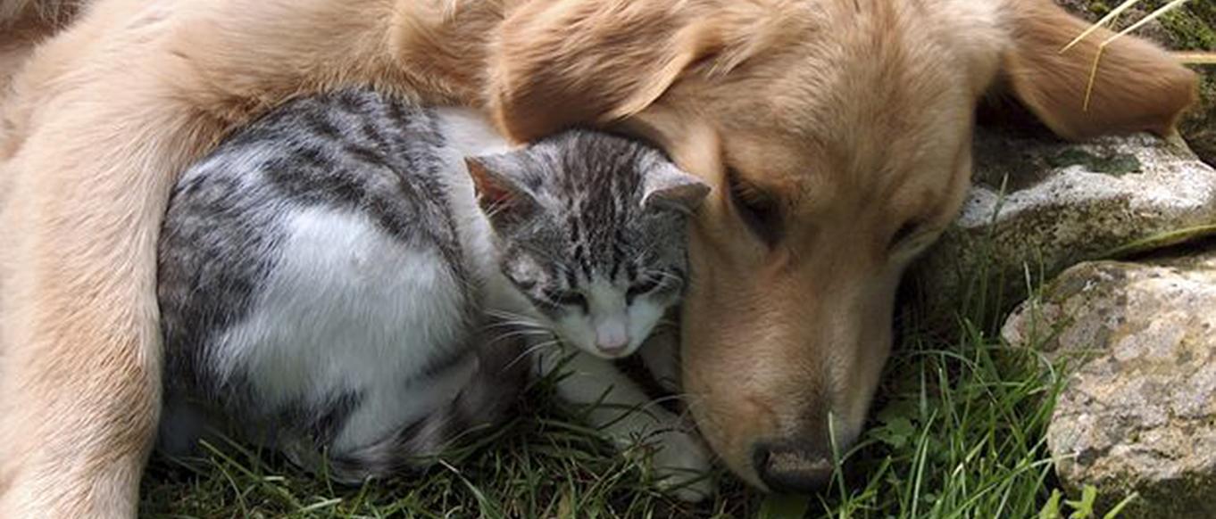 Hoe introduceer je een puppy bij een al aanwezige kat?