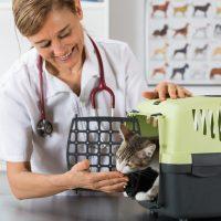 Tips voor wanneer uw kat naar de dierenarts moet