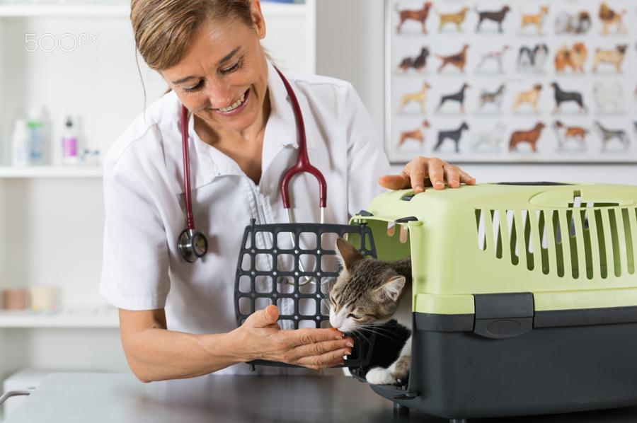 Kat naar de dierenarts