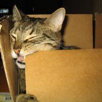 Katten en verhuizen. Tips voor een soepele overgang