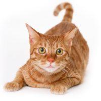 Onzindelijkheid bij katten