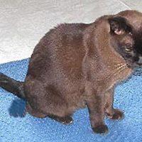 Plasproblemen en blaasgruis bij de kat