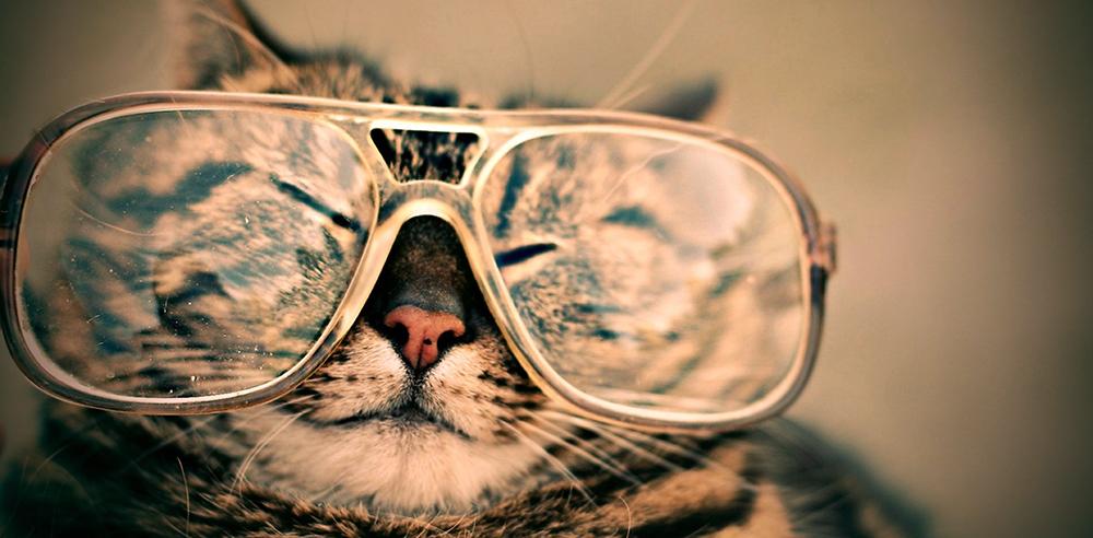 Katten in het nieuws