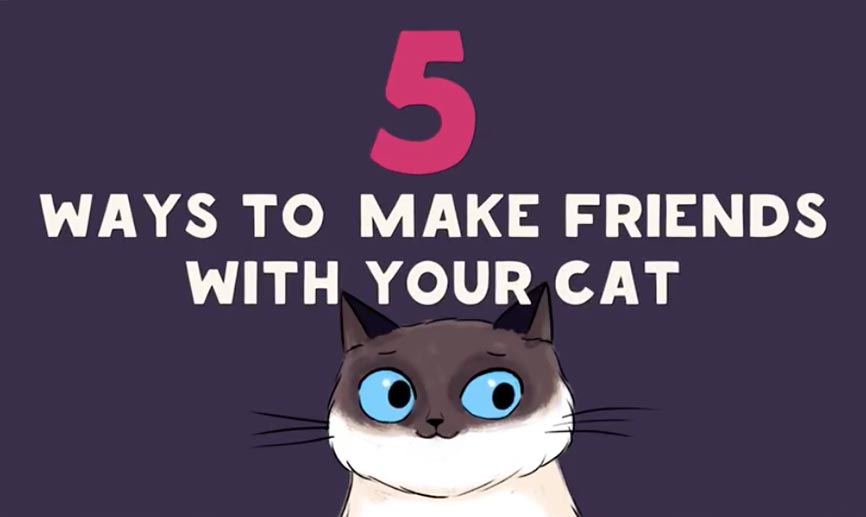 Hoe kun je je kat beter leren begrijpen?