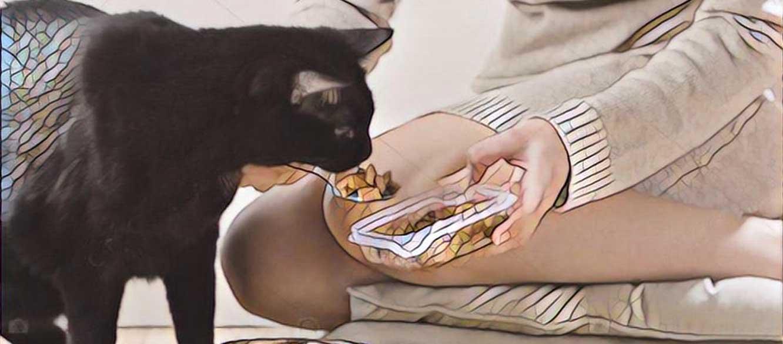 Koolhydraatarm kattenvoer