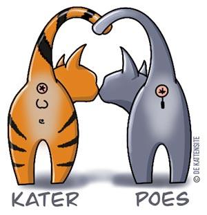 Het geslacht bij een poes- en kater kitten